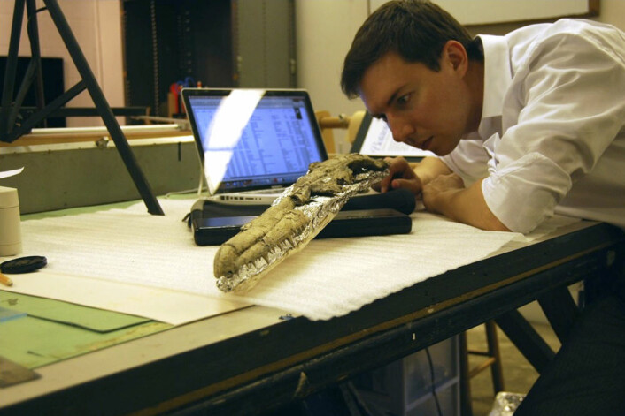 Her undersøker paleontologen Dan Ksepka skallen til det svært godt bevarte fossilet av Pelagornis sandersi. Gruppa som fuglen tilhører har karakteristiske tannlignende pigger på nebbet. (Foto: (Fotorettigheter: Dan Ksepka))