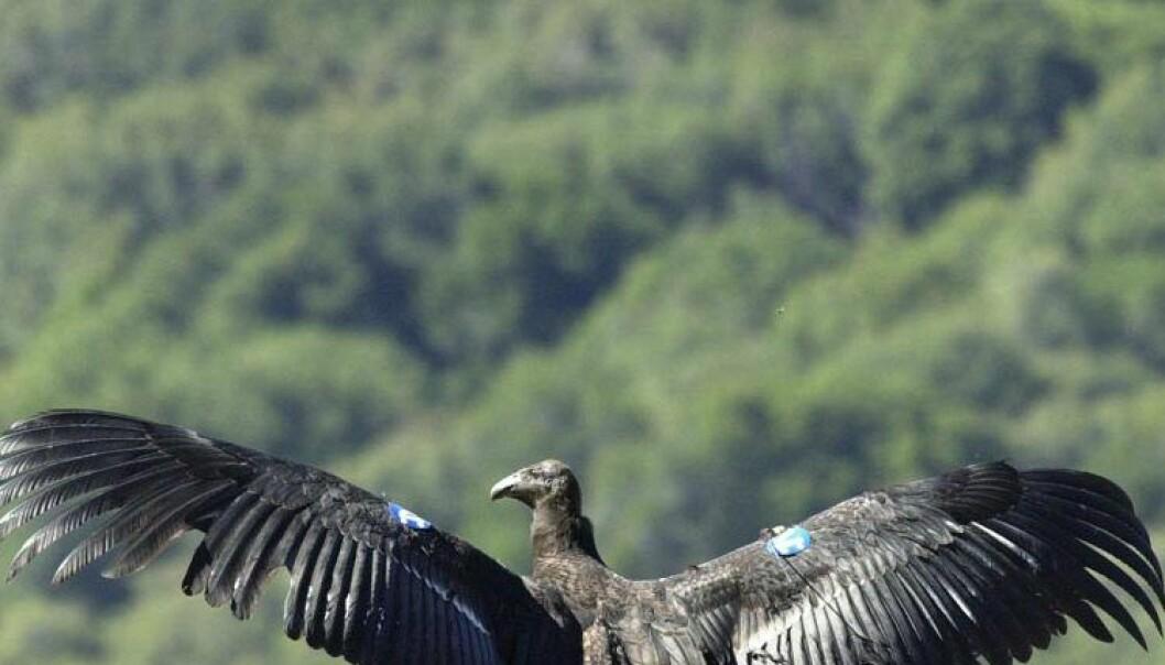 Etterlyser nye tiltak for truede arter
