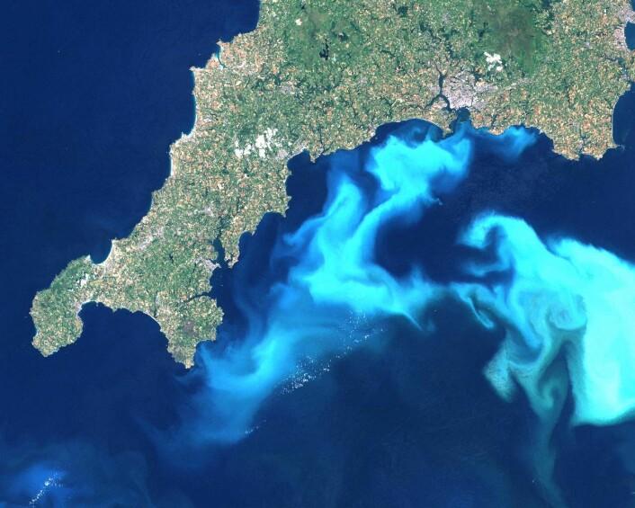 Alge- og planktonvekst utenfor englandskysten (Foto: (Illustrasjonsfoto, public domain))