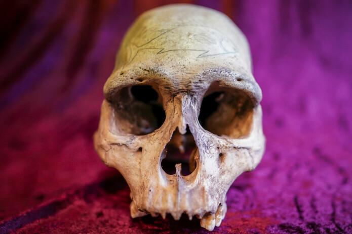 En av hodeskallene Heyerdahl tok med seg fra Påskeøya. (Foto: Heiko Junge, NTB scanpix)