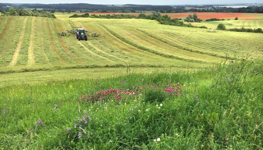 Slike blomster-enger som ligger like ved dyrket mark, er ille ute. De har mistet fire femdeler av insektene sine på ti år. (Foto: Dr. Ulrike Garbe / Landesamt für Umwelt, Brandenburg)