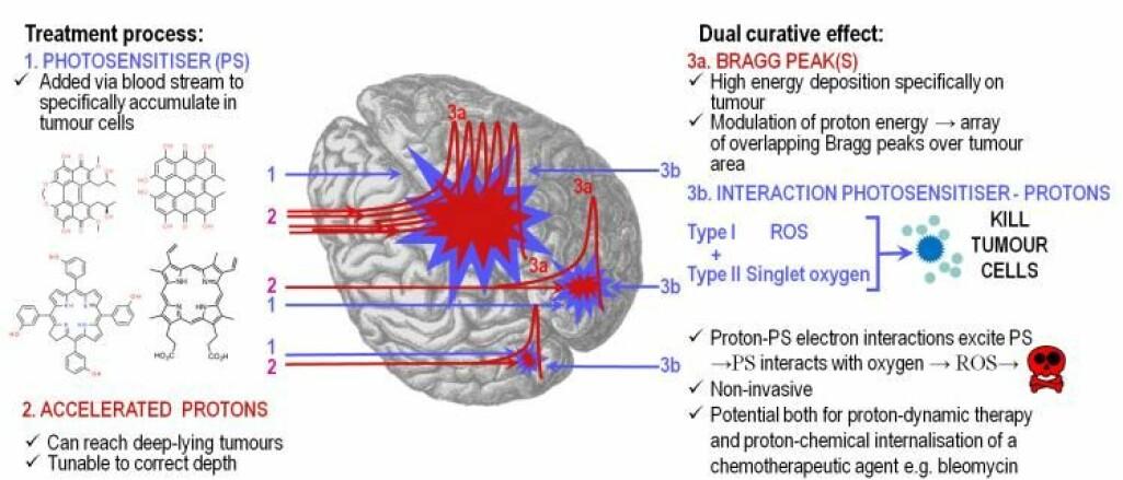Prinsipp for behandling av hjernekreft med legemidler og protonterapi. 1: Pasienten gis et legemiddel som søker seg til kreftceller. 2: Svulstene bestråles med protoner. 3: Kreftcellene dør både av protonstrålingen direkte og av molekyler som er dannet fra bestråling av legemiddelet. (Illustrasjon: Theodossis A. Theodossiou et. al.)