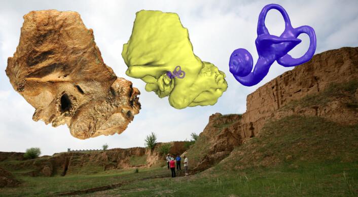 Fossilet av fortidsmenneskets hodeskalle viser at buegangene i det indre øret (t.h.) ligner de neandertalerne hadde. Bildet bak er fra utgravingsstedet i Kina der fossilet ble funnet. (Foto: Institute of Vertebrate Paleontology and Paleoanthropology, Chinese Academy of Science)