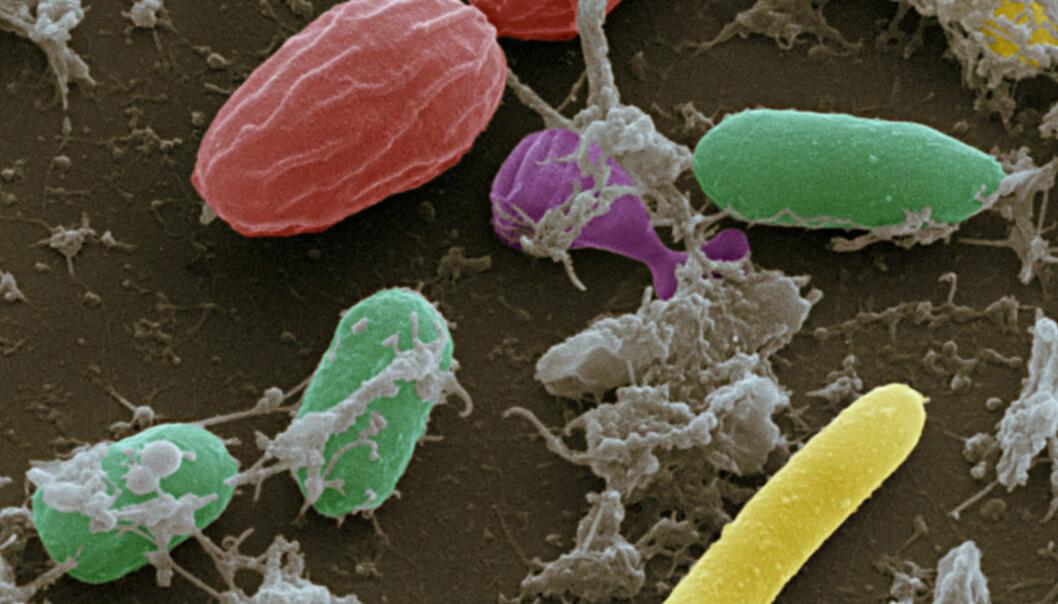 Forskere har funnet 500 nye tarmbakterier