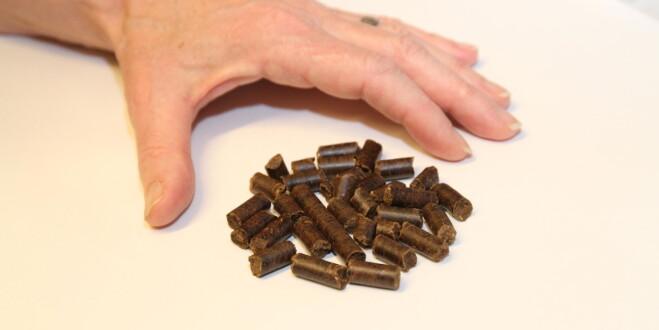 Disse pelletsene kan brukes i dagens kullkraftverk og bidra til drastiske kutt i CO2-utslippene fra europeisk kraftproduksjon. (Foto: Asbjørn Leirvåg / UiB)