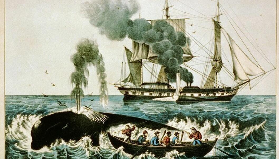 Hvalfangst er ikke for pingler. Illustrasjon av en hvalfangstbåt fra New England på den nordlige Atlanterhavskysten i USA. (Illustrasjon: US Library og Congress/Wikimedia Commons)