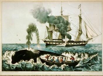 Hvalfangst er ikke for pingler. Illustrasjon av en hvalfangstbåt fra New England på den nordlige Atlanterhavskysten i USA. (Foto: (Illustrasjon: US Library og Congress/Wikimedia Commons))