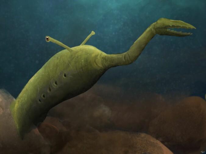 Tully-monsteret ble mellom 8 og 40 centimeter langt og heter Tullimonstrum på fagspråket. (Illustrasjon: PaleoEquii [CC BY-SA 4.0 (https://creativecommons.org/licenses/by-sa/4.0).