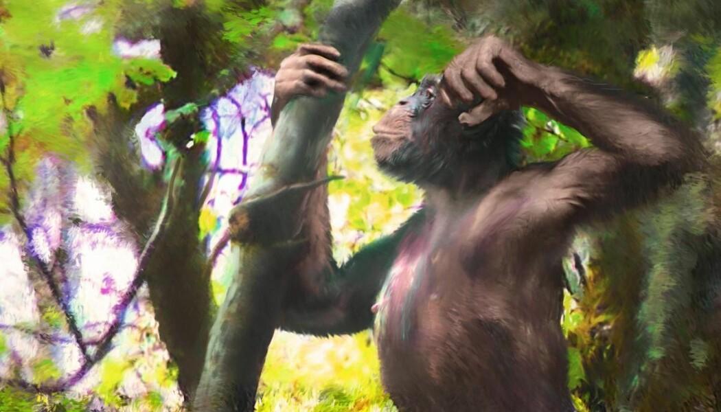 Apen som forskerne tror kunne gå på både to og fire, slik en kunstner ser den for seg. (Illustrasjon: Velizar Simeonovski)