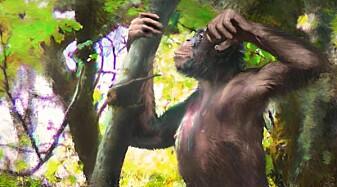 Forskere tror denne apen gikk på to bein for 12 millioner år siden