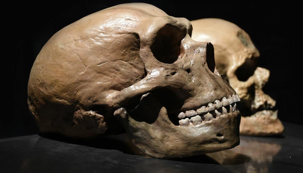 Neandertalerne var genetisk fjernere fra Homo sapiens, enn det noen sapiens-gruppe er fra noen annen i dag. Likevel: Hvor forskjellige var de, egentlig? spør Tunstad. (Foto: Petr Student / Shutterstock / NTB scanpix)