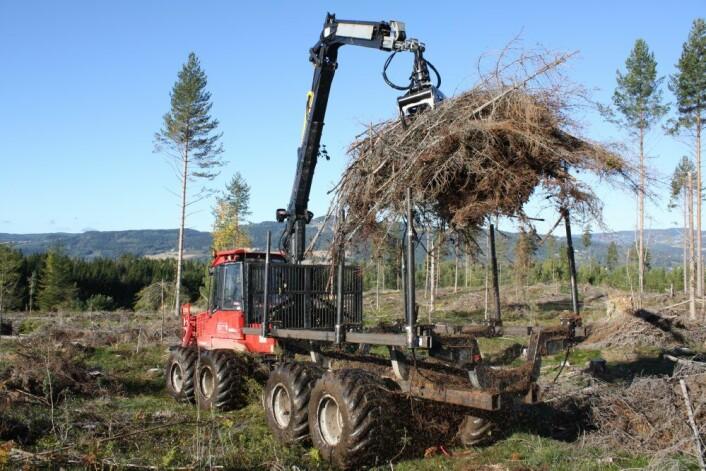 Grothauger fjernes tidlig på høsten. Foto Kjersti Holt Hanssen, Skog og landskap. (Foto: Kjersti Holt Hanssen)