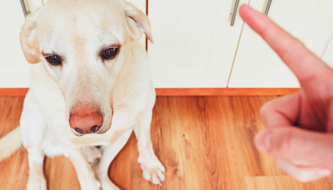 Derfor bør du ikke trene hunden med straff og kjefting