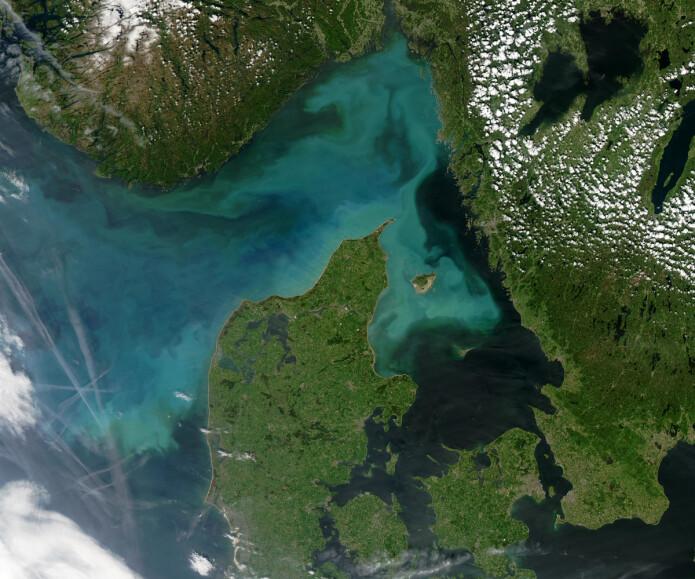 En oppblomstring av planteplankton i Skagerrak og kysten utenfor Danmark, sett fra rommet.