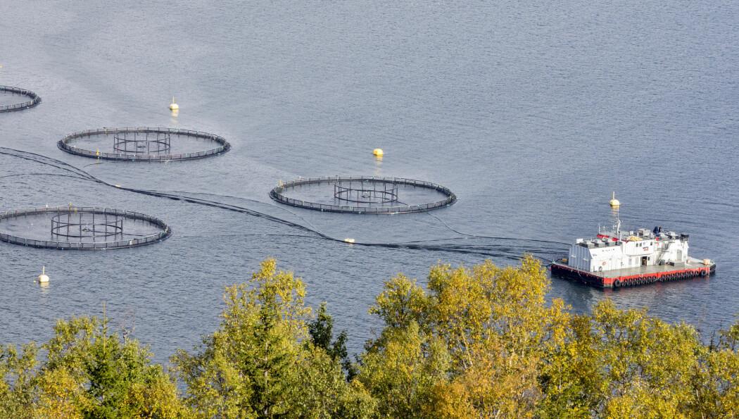 Professor Ragnar Tveterås avviser at støtten fra Fiskeri- og havbruksnæringens forskningsfinansiering har farget deres konklusjoner og sier at de fremover vil sørge for å opplyse enda tydeligere om finansiering. (Illustrasjonsfoto:Gorm Kallestad / NTB scanpix)