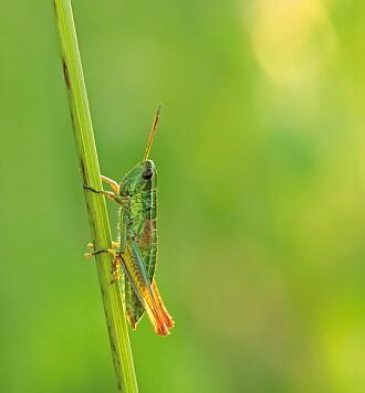 Forskerne talte blant annet hvor mange gresshopper de fant.
