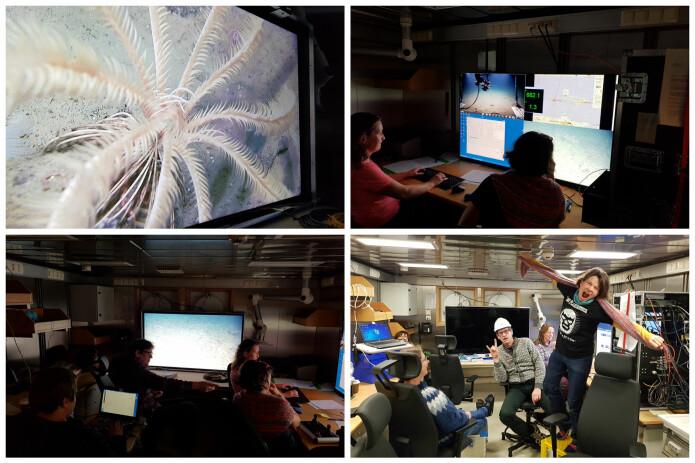 I videolaben er det viktig å konsentrere seg om havbunnsbildene på skjermen. Etter avsluttet transekt er det derimot lov å avreagere litt. Bilder: Lilja R. Bjarnadóttir
