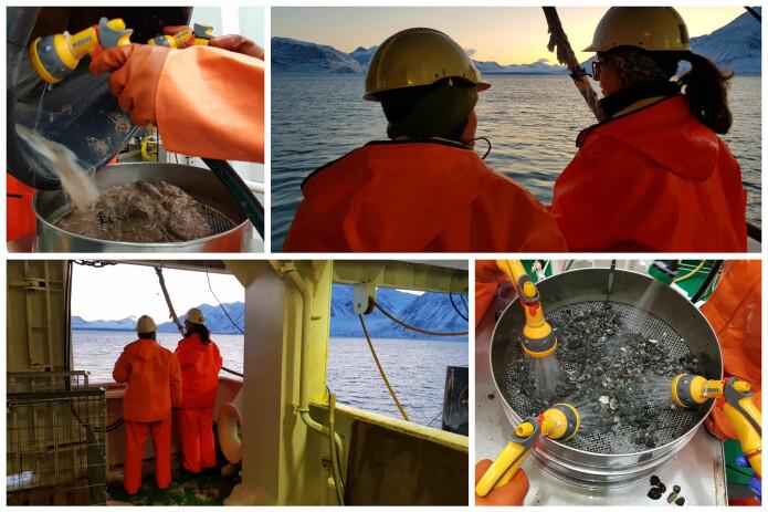Her nyter prøvetakerne de siste solstrålene før mørketiden setter inn i Kongsfjorden, og vipps, så kommer dyrene opp med bomtrålen. Bilder: Lilja R. Bjarnadóttir