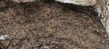 Maur ble fanget i bunker. De måtte spise hverandre for å overleve