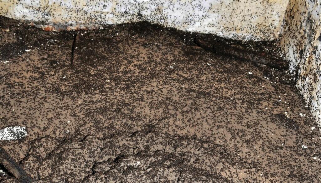 De pleier å leve i skogen, men disse maurene måtte klare seg i en kald og mørk bunker.