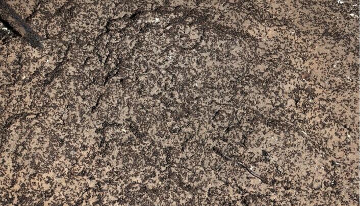 Maurene hadde organisert jorden i små hauger som fungerte som tue.