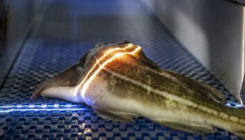 Using light to ascertain the quality of fish has the potential to revolutionize the fishing industry