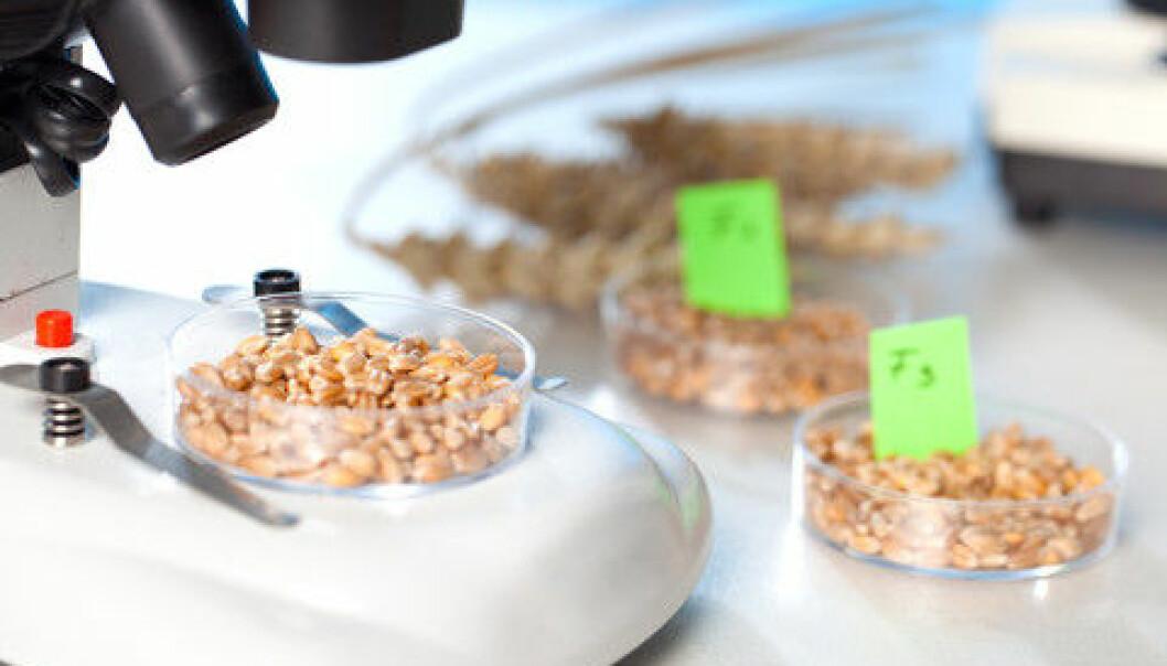 Forskning på GMO må være åpen og uavhengig