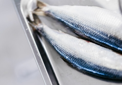 Norwegian oils from sea and land generate more omega-3