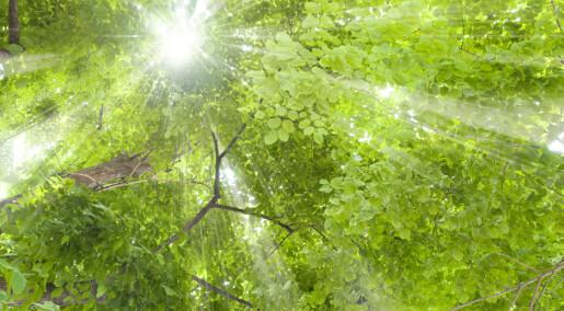 Kronikk: Plantenes dag i mai
