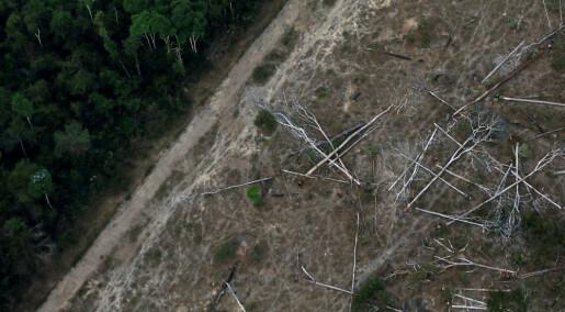 Kraftig økning i avskogingen i Amazonas