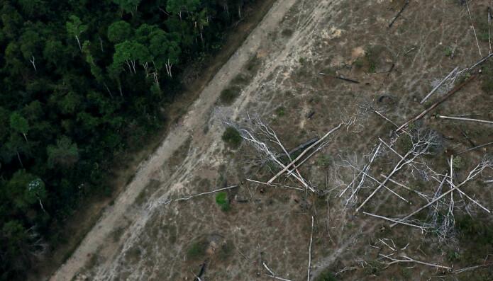 Bildet er tatt i september og viser avskogingen i et hjørne av Amazonas ved Porto Velho, vest i Brasil ved grensa til Bolivia.