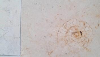 Gulvflisene i det geologiske instituttet ved Ludwig-Maximilians-universitetet skjuler jurasiske fossiler.