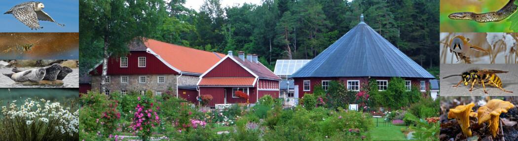 Naturbloggen – fra Naturmuseum og botanisk hage ved Universitetet i Agder