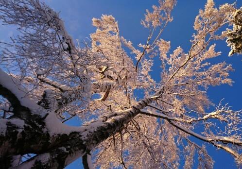 Under winter's spell: how trees slumber until spring