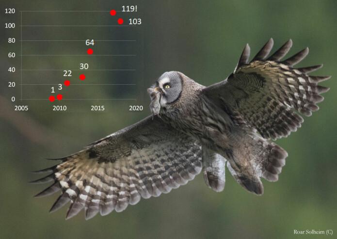 Antall lappuglehekkinger funnet i Hedmark 2009-2018.