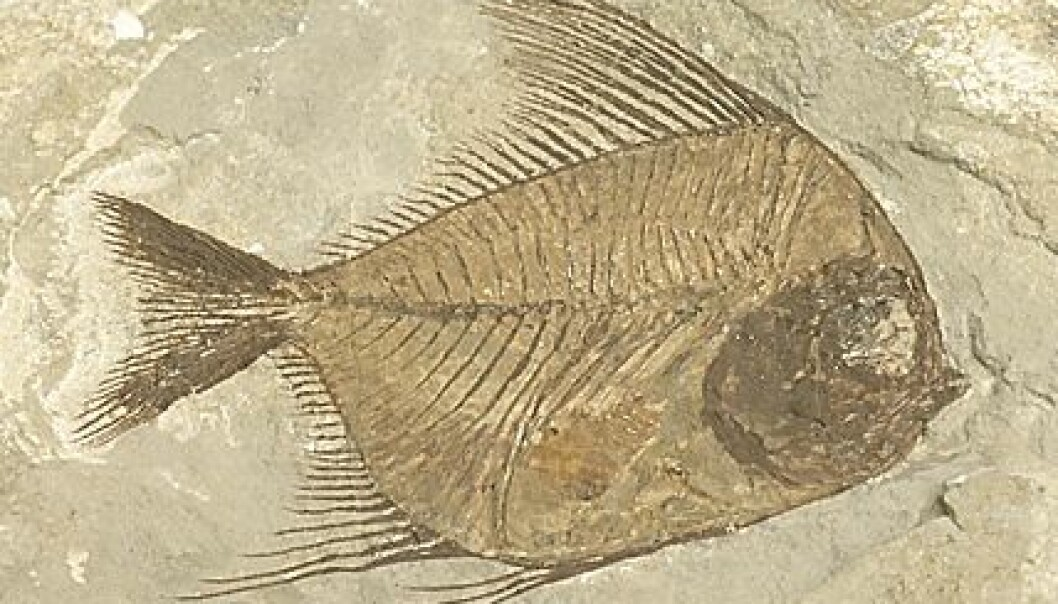 Fossil (foto; clipart)