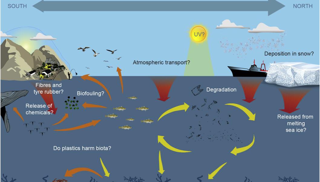 Eksempler på kunnskapshull om distribusjon, transport og påvirkning av plastsøppel i arktiske systemer. Røde piler = plastforsøpling, gule piler = transportveier, oransje piler = matweboverføring.