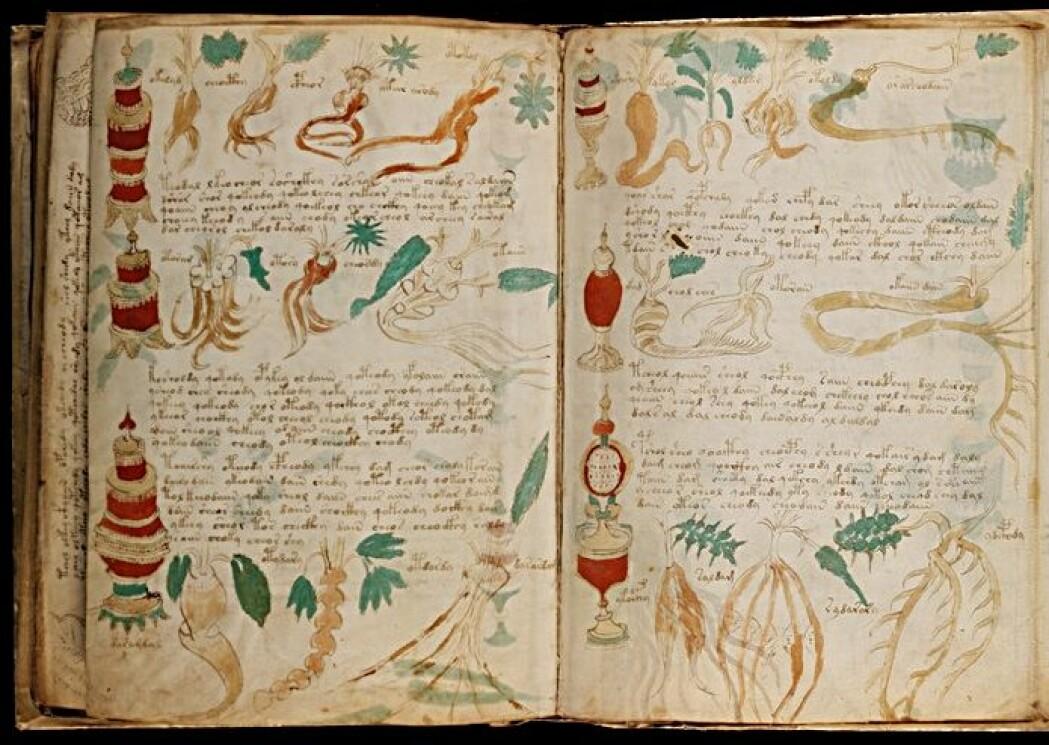 Over hundre forskjellige planter er avbildet i boken. Men ingen av disse mystiske plantene er det mulig å kjenne igjen.