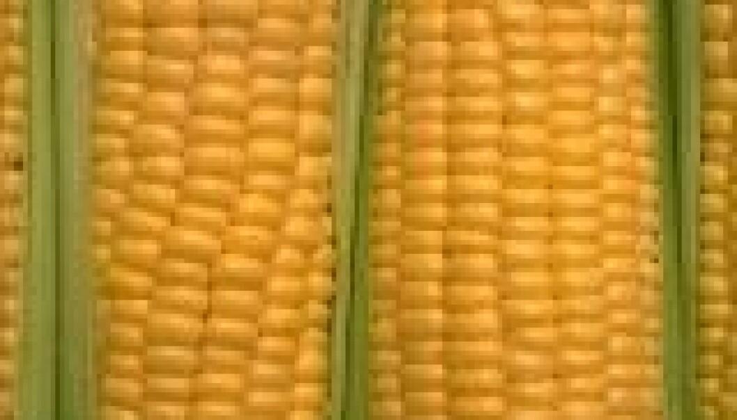 Fakta om GMO-påvisning