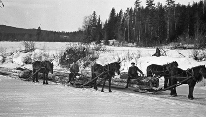 Tømmerkjøyring med hest.