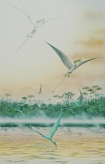 """Pterosaurus. (Bilde: Naturhistorisk museum, Universitetet i Oslo)"""