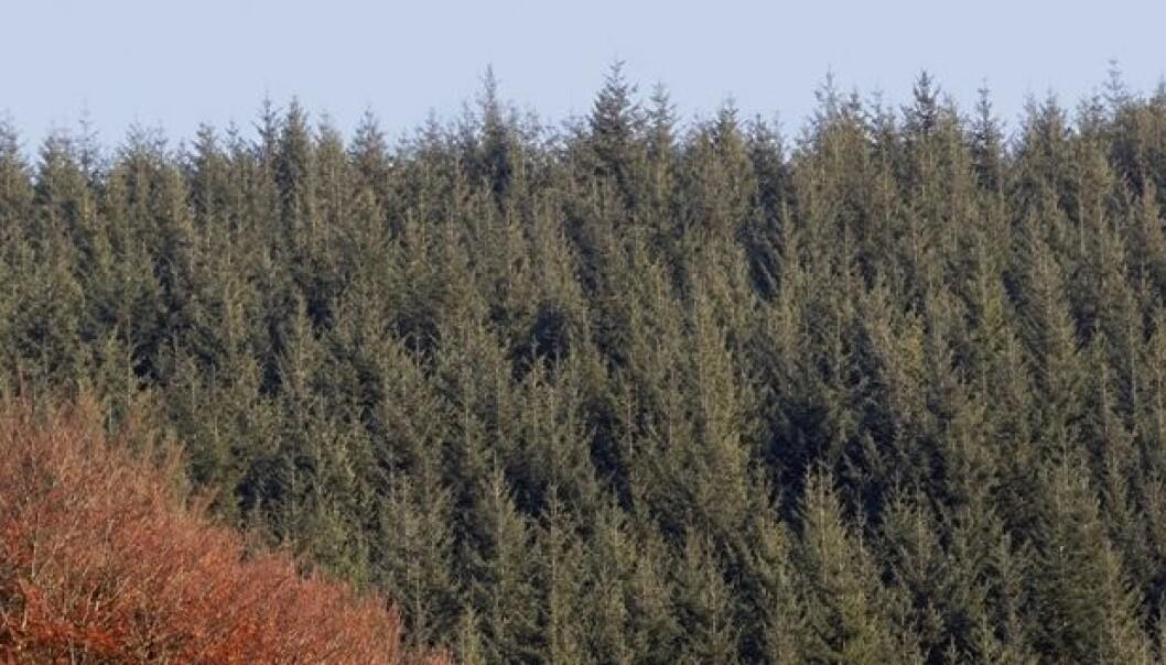 Trevirke fra skogen er ikke CO2-nøytralt