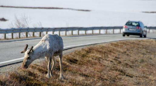 Sensor varsler når Rudolf er på vei