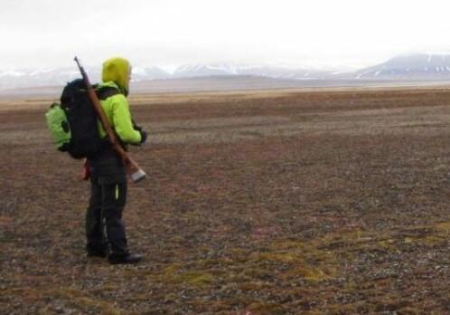 Svalbard reindeer populations rebounding from centuries of hunting