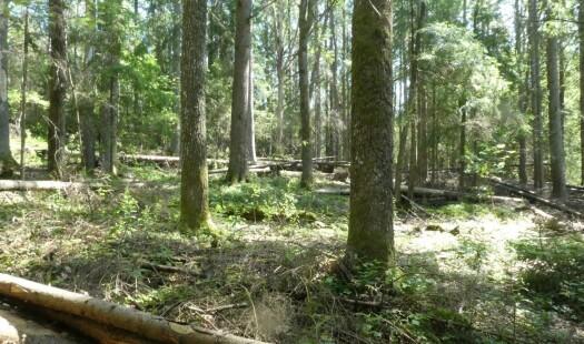 De mange måtene å se skog på