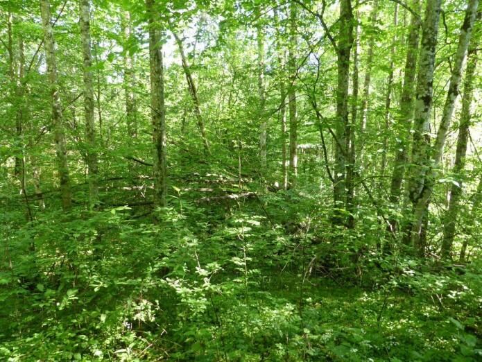 :] Grunneierne ser både muligheter og utfordringer med sine gjengroingsskoger med edelløvtrær.