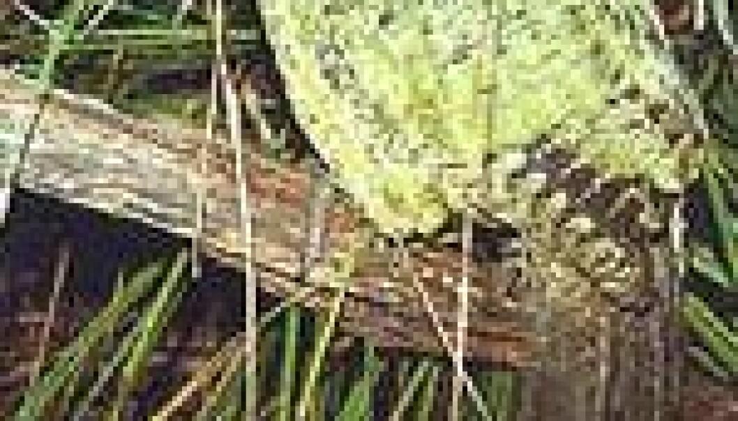 Galapagos trues av invaderende arter