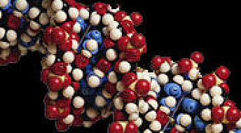 Kroppen reparerer DNA-skader