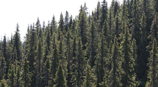 Kronikk: Vaklende industri, voksende skog