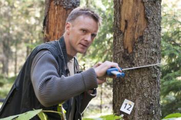 Knut Ole Viken klaver et tre, det vil si å måle diameteren på stammen i brysthøyde. Et tre er definert som større enn 5 cm i brysthøyde. (Foto: Lars Sandved Dalen/Skog og landskap)